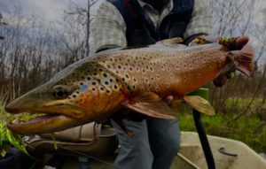 Northwest/Lower Michigan Fly Fishing Report…May 23rd,2019